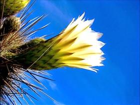 florcactus